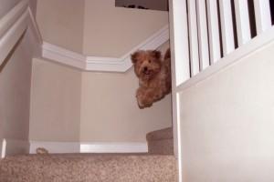 Dog Running Down Stairs