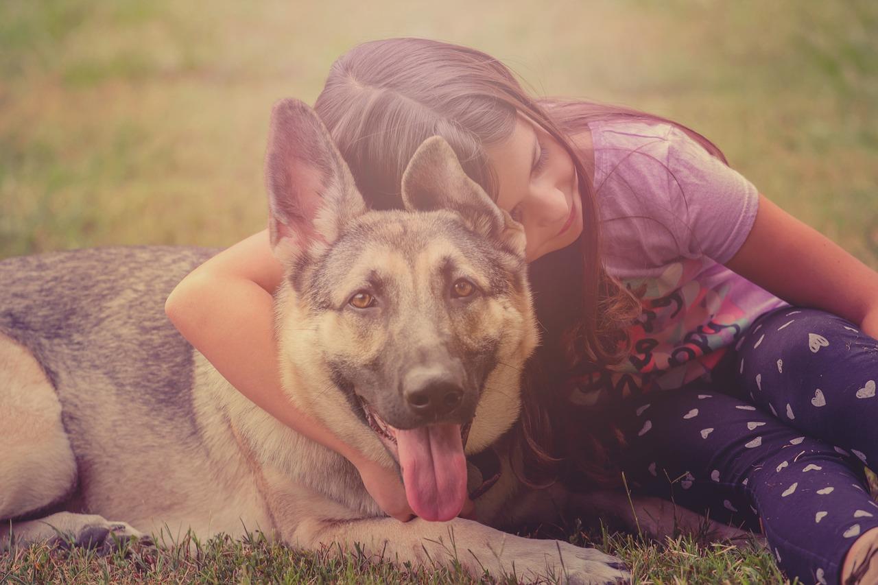 dog-3963308_1280